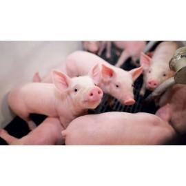Detergenţi ferme de porci