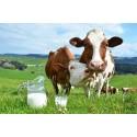 Detergenţi ferme de vaci